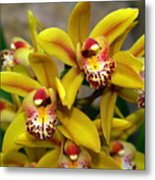 Orchid 9 Metal Print by Marty Koch