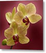 Orchid Metal Print by Sandy Keeton