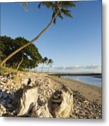 Palm And Driftwood Metal Print by Ron Dahlquist - Printscapes