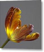 Parrot Tulip 21 Metal Print by Robert Ullmann