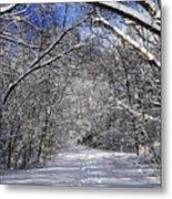 Path In Winter Forest Metal Print by Elena Elisseeva