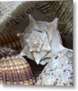 Seashells Metal Print by Frank Tschakert