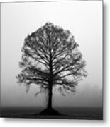 The Tree Metal Print by Amanda Barcon