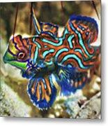 Tropical Fish Mandarinfish Metal Print by MotHaiBaPhoto Prints