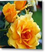 Yellow Roses Metal Print by Amy Fose