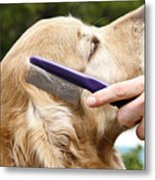 Dog Grooming Metal Print by Photo Researchers Inc