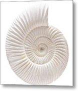Ammonite Metal Print by Gavin Kingcome