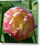 Lotus Blossom  Metal Print by Crystal Garner