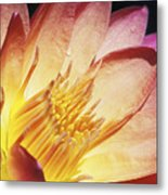 Pink Water Lily Metal Print by Bill Brennan - Printscapes