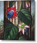 Thornton: Passion-flower Metal Print by Granger