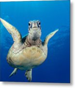 Green Sea Turtle Metal Print by Dave Fleetham - Printscapes