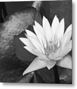 Water Lily Metal Print by Bill Brennan - Printscapes