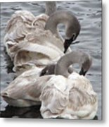 4 Swans Metal Print by Laurie With