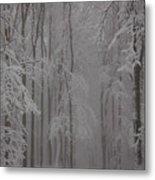 Winter Metal Print by Gabriela Insuratelu