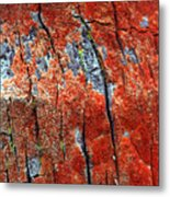 Tree Bark Metal Print by John Foxx