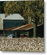 A Cotton Field Surrounds A Small Farm Metal Print by Medford Taylor