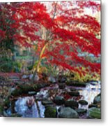 A Japanese Maple With Colorful, Red Metal Print by Darlyne A. Murawski