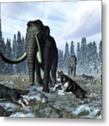 A Pack Of Dire Wolves Crosses Paths Metal Print by Walter Myers