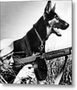 A Trained German Shepherd Sitting Watch Metal Print by Everett
