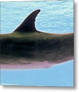 A Very Friendly Fellow Metal Print by Methune Hively