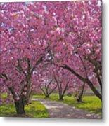 A Walk Down Cherry Blossom Lane Metal Print by Cindy Lee Longhini