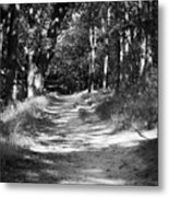 A Walk In The Woods Metal Print by Edward Myers