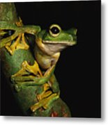 A Wallaces Flying Frog Metal Print by Tim Laman