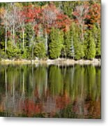 Acadia Tree Reflections Metal Print by Alexander Mendoza