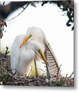 Affectionate Chicks Metal Print by Kenneth Albin