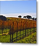 After The Harvest Metal Print by Patricia Stalter