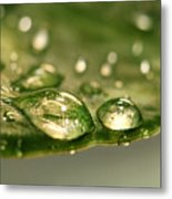 After The Rain Metal Print by Sandra Cunningham