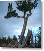 Against The Odds Metal Print by Idaho Scenic Images Linda Lantzy