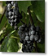 Almost Harvest Time Metal Print by Michael Flood