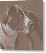American Pit Bull Terrior 1 Metal Print by Stacey Jasmin