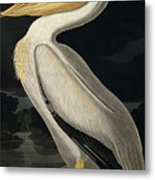 American White Pelican Metal Print by John James Audubon