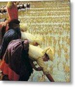 An Italian Rice Field Metal Print by Angelo Morbelli