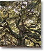 Angel Oak Tree Live Oak  Metal Print by Dustin K Ryan