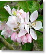 Apple Blossom Metal Print by Joyce Woodhouse