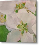 Apple Blossoms Metal Print by Sharon E Allen
