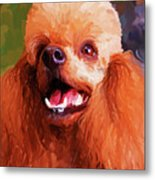 Apricot Poodle Metal Print by Jai Johnson