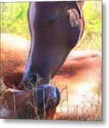 Arabian Foals - Peaceful Metal Print by ELA-EquusArt