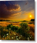 Aridity Metal Print by Phil Koch