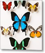 Assorted Butterflies Metal Print by Garry Gay