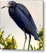 Audubon Blue Metal Print by Karen Wiles