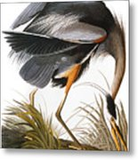 Audubon: Heron Metal Print by Granger