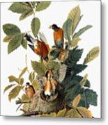 Audubon: Robin Metal Print by Granger