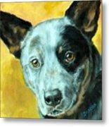 Australian Cattle Dog Blue Heeler On Gold Metal Print by Dottie Dracos