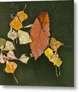 Autumn 1 Metal Print by Kenton Smith