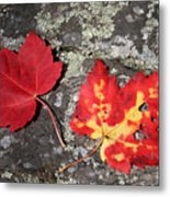 Autumn Colors Metal Print by Kate  Leikin