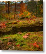 Autumn Colors Metal Print by Ryan Heffron